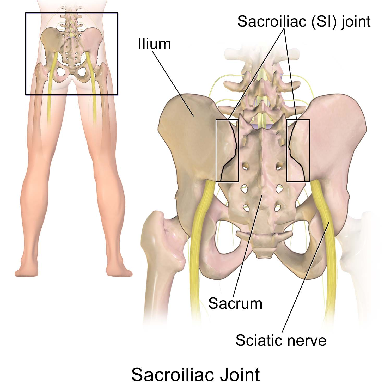 Effective Solutions For Sciatic Nerve Pain Dr Adrienne Owens